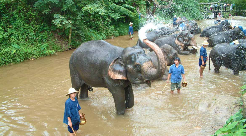 Thailand-VIP-trail.Elephants-morning-bath.-Chiang-Mai